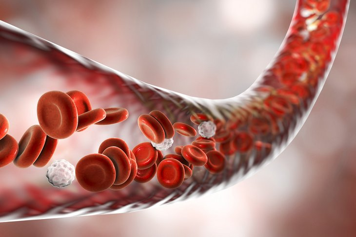Three dimensional illustration of blood vessel with flowing erythrocytes and leukocytes.